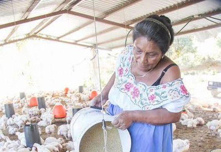 La granja 'Terramaya' produce empleos directos e indirectos a mujeres del municipio de Tecoh y sus alrededores. (Milenio Novedades)