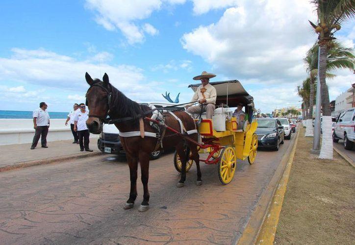 En Cozumel operan 24 concesiones de calesas que brindan el servicio de paseos en rutas turísticas. (Gusavo Villegas/SIPSE)