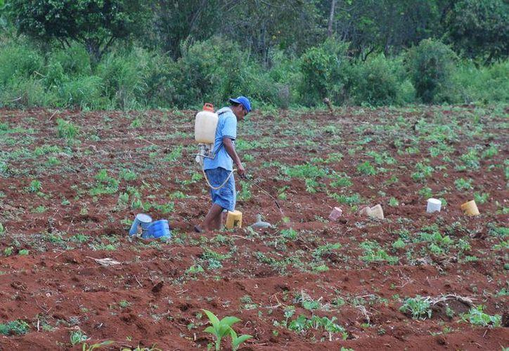 La Sedari atiende a más de 37 mil productores agrícolas en los diez municipios del estado. (Cortesía/SIPSE)