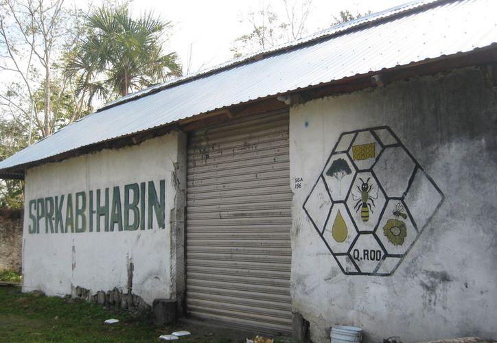 'Kabi Habin' agluitina 126 apicultores y cuenta con siete mil colmenas y cada año aumenta su producción. (Javier Ortiz/SIPSE)