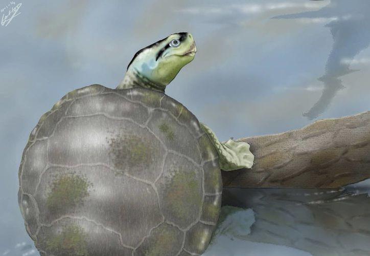 Versión artística de cómo fue esta especie de tortuga, de 140 millones de años, descubierta en la costa de Portugal. (EFE)