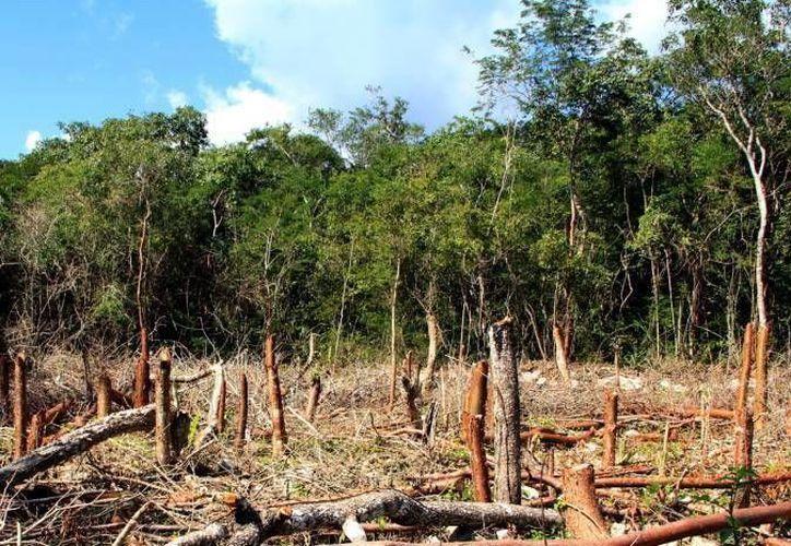 En la Península de Yucatán se han perdido 80 mil hectáreas de montes. (Milenio Novedades)