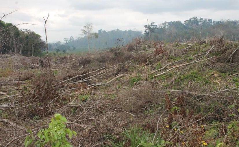 Los habitantes temen meterse en un problema legal por la devastación. (Edgardo Rodríguez/SIPSE)