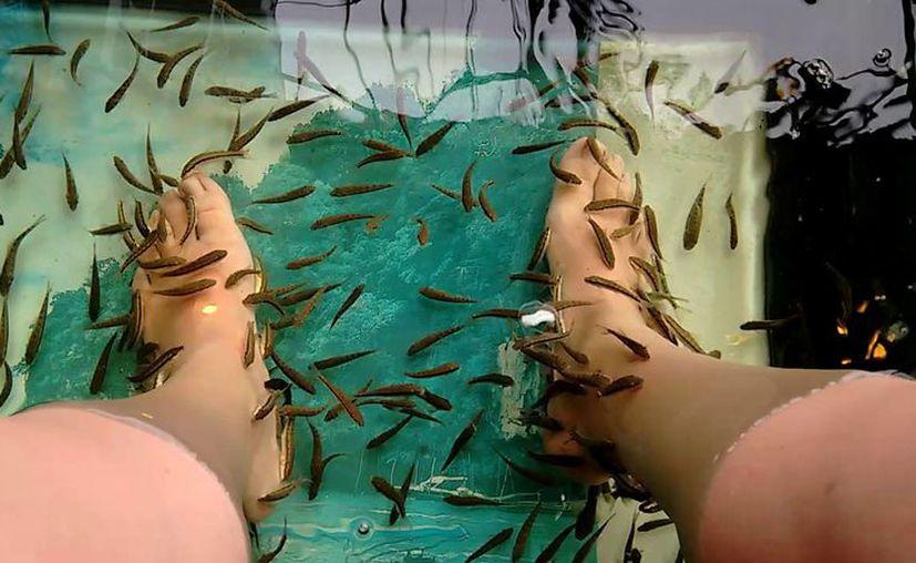 El 'pedicure' con peces han sido prohibidos en al menos 10 estados de Estados unidos. (Foto: Contexto)