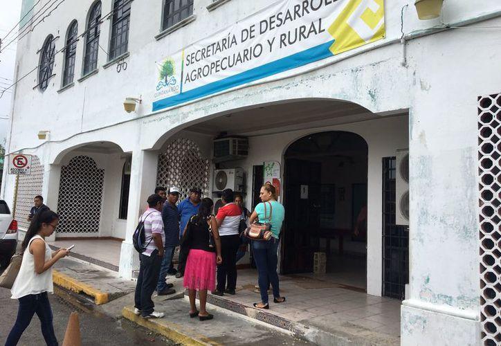 Los campesinos afectados son de José María Morelos, Felipe Carrillo Puerto, Othón P. Blanco, Bacalar, Lázaro Cárdenas y Tulum. (Joel Zamora/SIPSE)