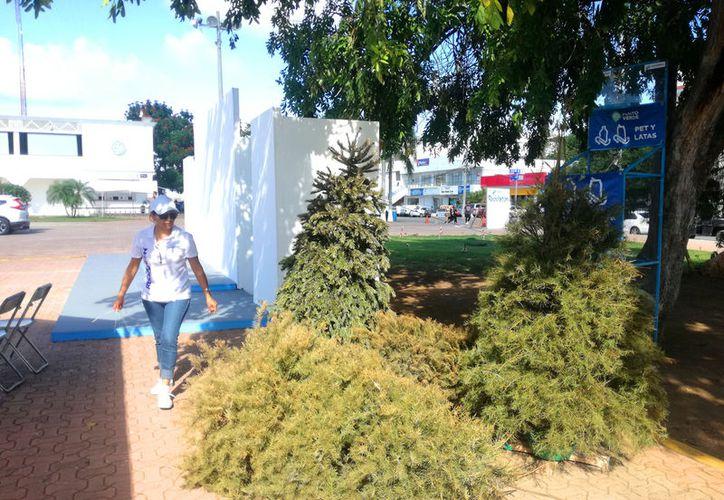 El punto de acopio de árboles navideños se ubica sobre la explanada 28 de Julio del centro de la ciudad. (Foto Daniel Pacheco/SIPSE)