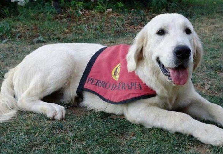 En febrero iniciarán las terapias con perros para niños con discapacidad. (Foto de contexto/Internet)