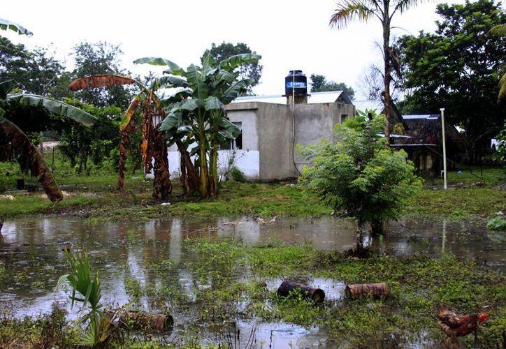 El Río Hondo no presenta creciente que represente peligro. (Harold Alcocer/SIPSE)