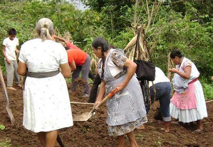 Las mujeres afectadas han estado expuestas al corte del maíz o de caña de azúcar. (oem.com.mx)