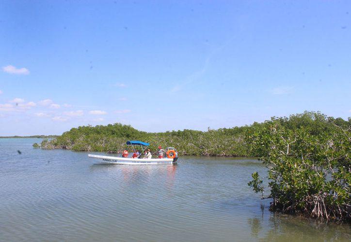 Las algas y los arrecifes son atractivos turísticos, por lo que urge protegerlos. (Sara Cauich/SIPSE)