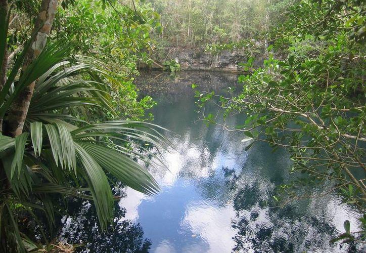 Expertos buscan la conservación y la preservación del medio ambiente. (Contexto/Internet)