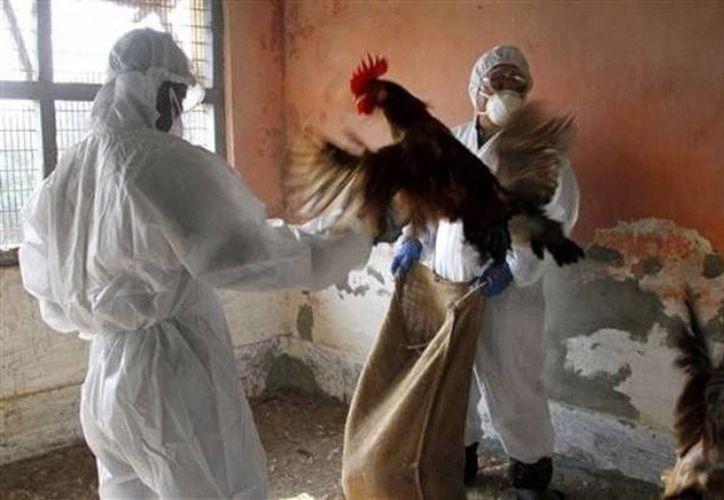 China toma medidas drásticas en los mercados de aves vivas e intensificar la vigilancia de las personas con síntomas asociados con el virus. (Archivo/Agencias)