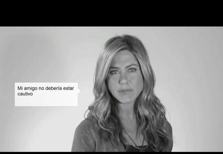 """El Dolphin Project PSA """"My Friend is"""" ya circula en las redes sociales. (YouTube)"""