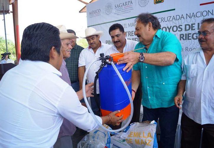Se han radicado 84 millones 264 mil 317 pesos al campo quintanarroense. (Edgardo Rodríguez/ SIPSE)