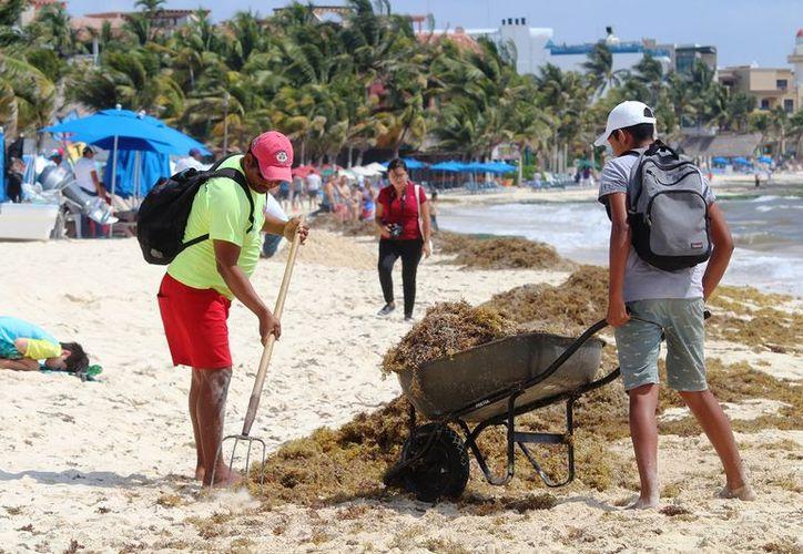 Intensos trabajos de limpieza para sacar sargazo que recala en las playas. (Foto: Adrián Barreto)