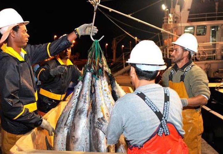México insiste en que EU mantiene  el efecto discriminatorio sobre las exportaciones de atún mexicano. (Archivo/ www.diariodeavisos.com)