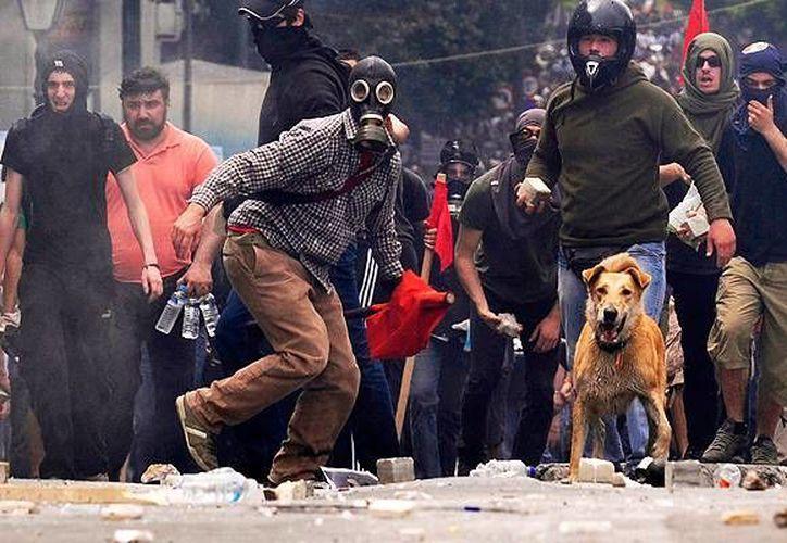 Los perros callejeros como Ruby son protagonistas habituales de las protestas en Atenas. (Agencias)