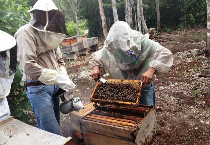 Los apicultores se han visto en la necesidad de resguardar sus panales, porque sufren invasión de polilla al quedar inactivas. (Javier Ortiz/SIPSE)