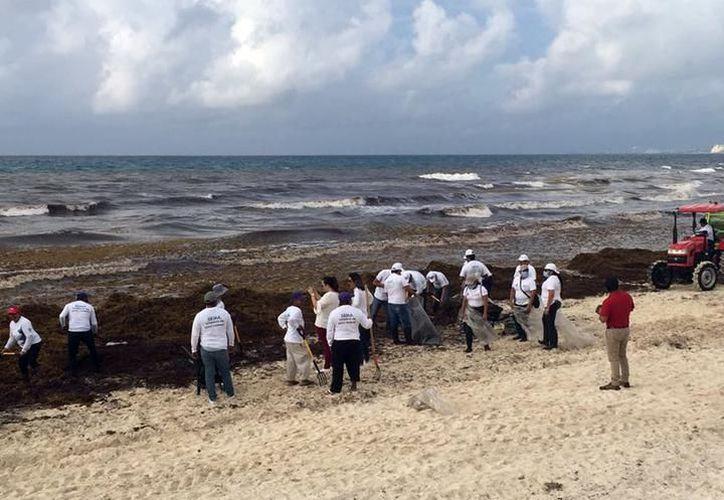 En 2017 el recale de sargazo a las playas de la zona norte de Quintana Roo se convirtió en un problema.