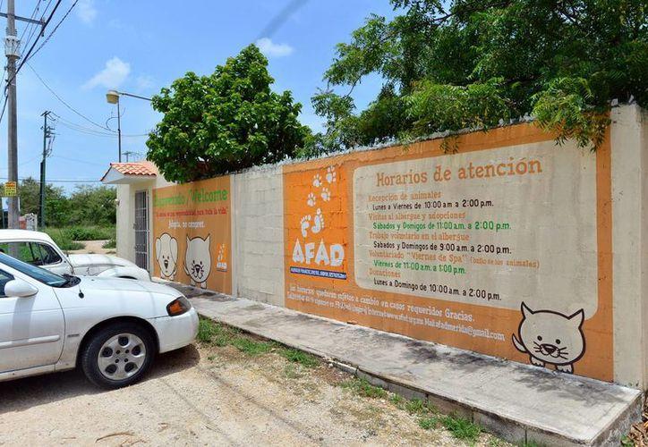 El albergue de AFAD ofrece en la actualidad techo y comida a 65 perros mientras se les coloca en una familia responsable. (Milenio Novedades)