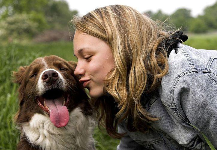 Según estudios, los perros y gatos son portadores de una bacteria que podría provocar graves consecuencias para la salud. (Foto: Hoy La Caja Gurú)