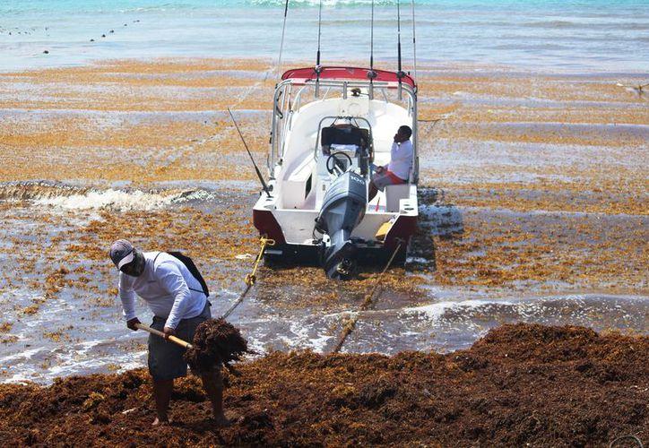 Esperan que con la limpieza de la playa El Recodo se puedan realizar actividades turísticas en el sitio. (Octavio Martínez/SIPSE)