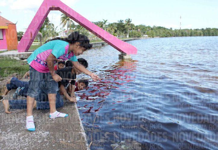 En la Bahía de Chetumal, se puede obtener pescado de diferentes especies. (Joel Zamora/SIPSE)