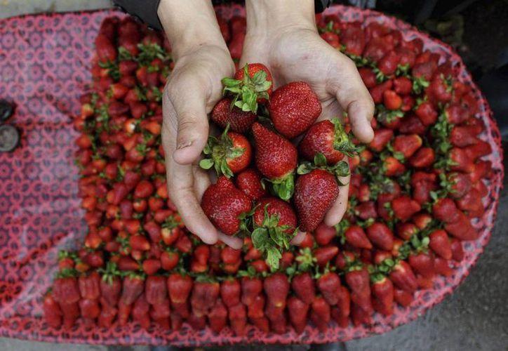 La fruta roja es perecedera pero  era importante extender su vida útil ya que tienen una rápida degradación. (EFE)