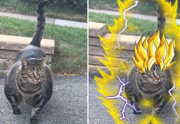 Usuarios no dudaron en llenar de memes al gato que ha conquistado las redes sociales. (Twitter)