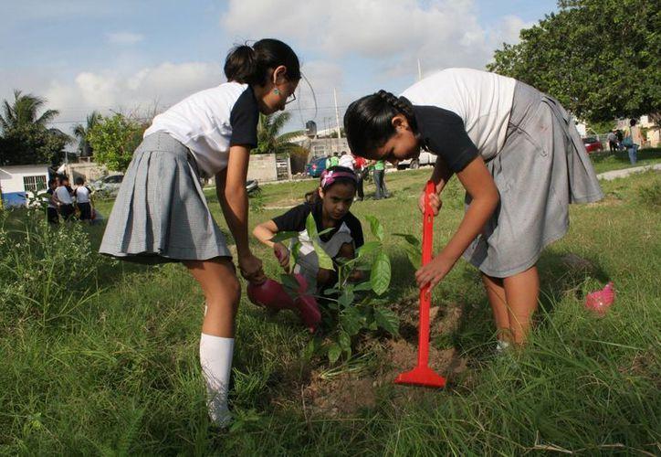 Esperan reforestar hasta 60 mil hectáreas. (Israel Leal/SIPSE)