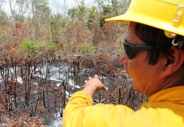 Personal de la Conafor integra los datos del primer incendio de la temporada. (Edgardo Rodríguez/SIPSE)