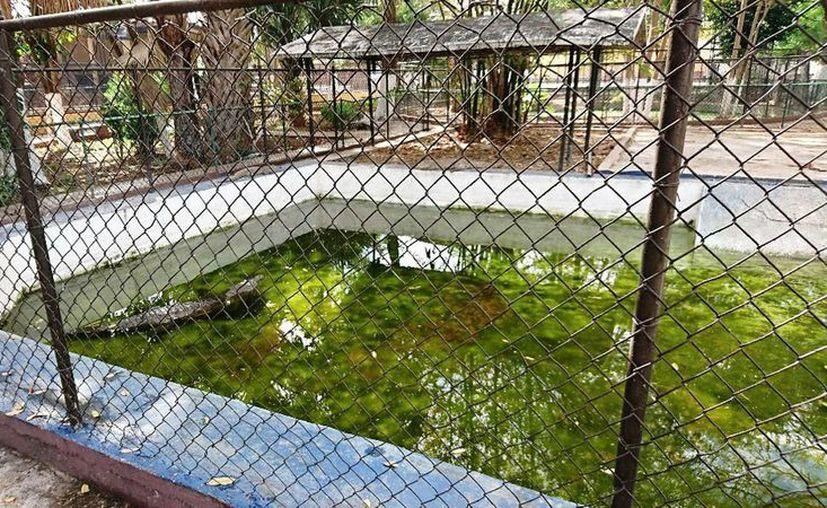Piden mayor seguridad para la fauna en un zoológico de la colonia Mulsay. (Milenio Novedades)