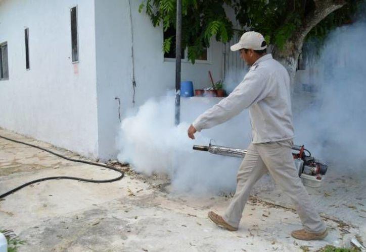 Suman tres semanas de labores de descacharrización en el municipio. (Cortesía/SIPSE)