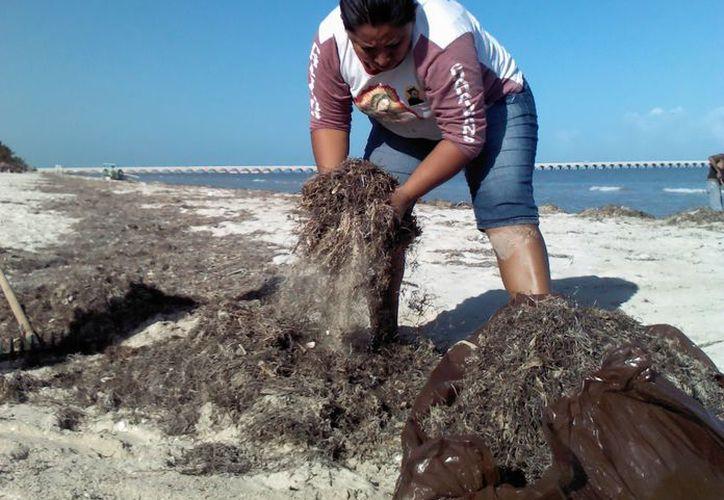 Trabajadores de la Comuna de Progreso limpian las playas. (Manuel Pool/SIPSE)