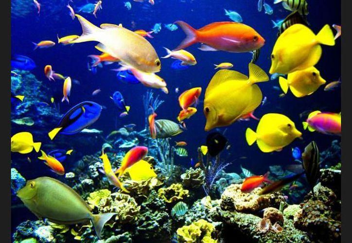 El animal vive en los bellas aguas de Australia. (Contexto/internet).