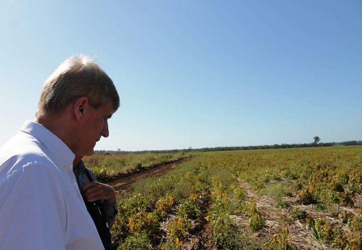 Productores agrícolas de los municipios de Othón P. Blanco y Bacalar sembrarán tres mil hectáreas de soya. (Edgardo Rodríguez/SIPSE)