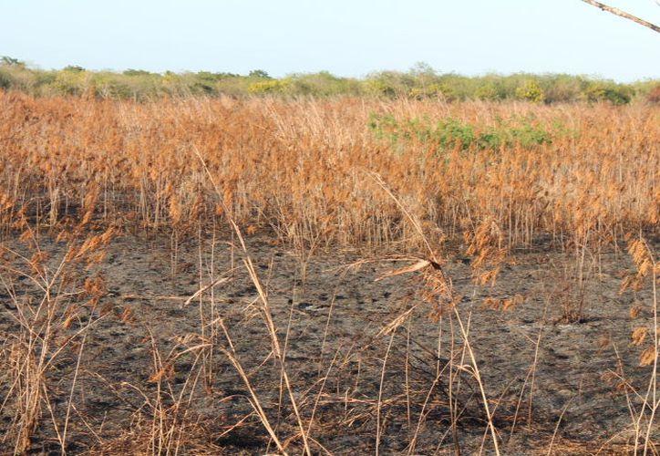 Hasta el 15 de marzo, el municipio de Ixtaltepec, en la costa de Oaxaca, era el que sufría sequía extrema, mientras que Campeche, Yucatán y Quintana Roo estaban en nivel moderado y normal.