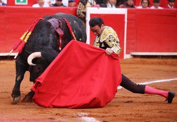 Buscan acelerar la reforma a la Ley de bienestar animal para desaparecer la corrida de toros y peleas de gallos. (Foto: Contexto)