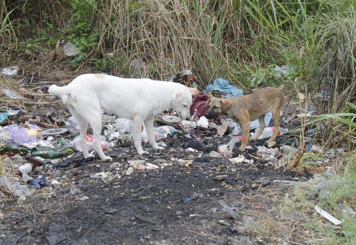 El documento fue redactado por decenas de colaboradores de diversas asociaciones protectoras de animales. (Israel Leal/SIPSE)