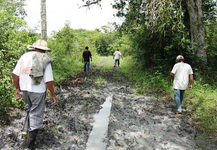 Los caminos sacacosechas son usados para desviar recursos. (Edgardo Rodríguez/SIPSE)
