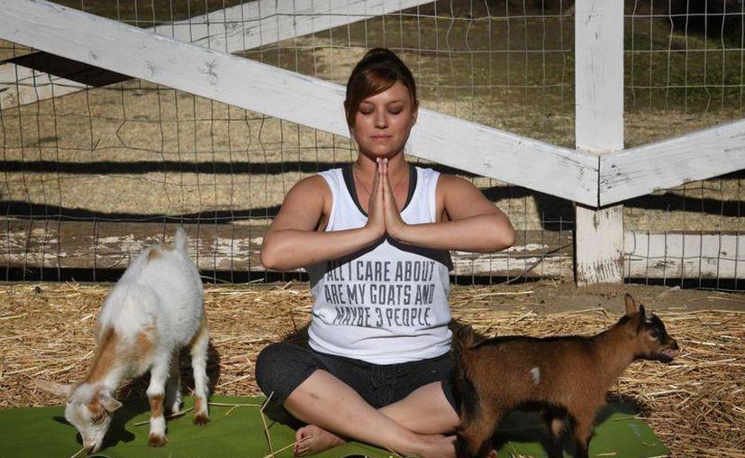 Unas 20 personas y 15 cabras -11 crías y cuatro madres- participan de esta clase organizada al aire libre. (AFP)