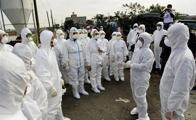 Expertos creen que el virus H5N5 se está diseminando a través de las heces fecales de aves migratorias. (EFE)
