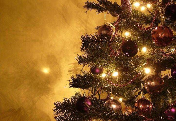 Exponer el árbol a temperaturas de más de 25 grados centígrados ocasiona que se seque con mayor rapidez: aumenta la probabilidad de incendios. (Foto de Contexto/Internet)