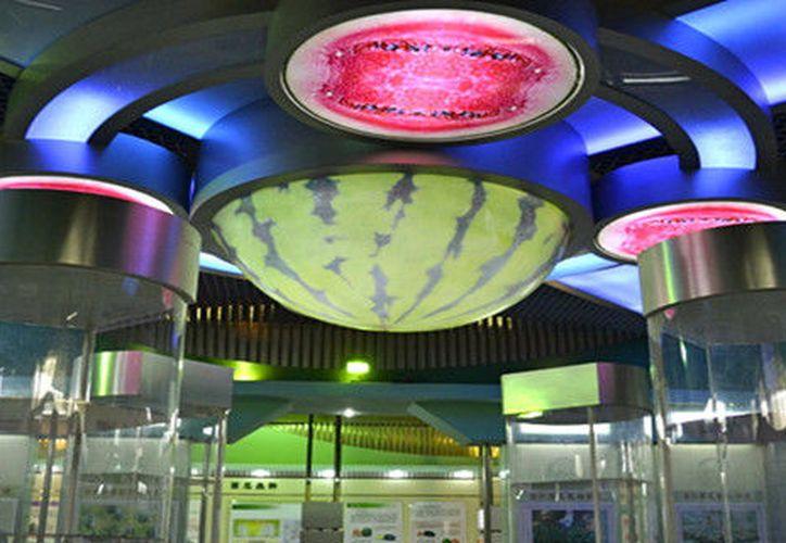 En el planeta se multiplican museos que se salen de la lógica tradicional de las ciencias y las bellas artes. (Internet/Contexto)