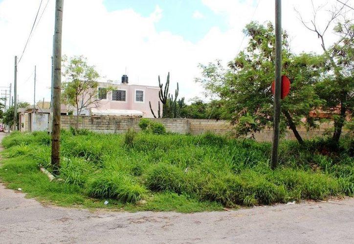 El diputado Francisco Torres Rivas tiene propuestas para los predios abandonados del Centro Histórico y los terrenos baldíos de las colonias de Mérida. (SIPSE)