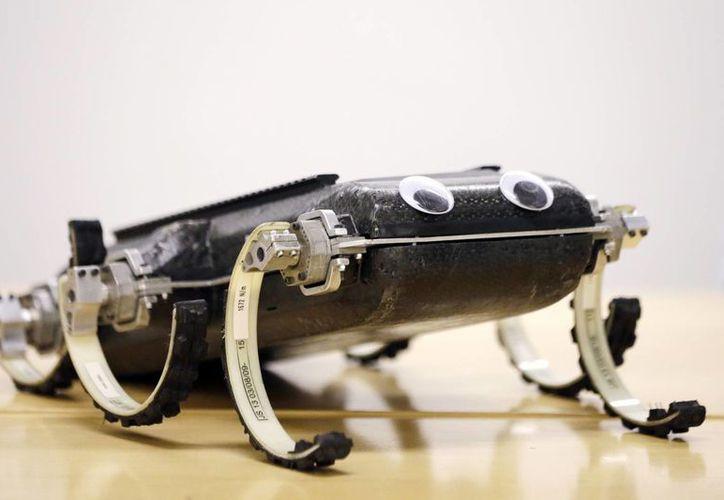 El RHex realiza con sus patas 'algo que no se imaginaría hacer con ruedas'. (Agencias)