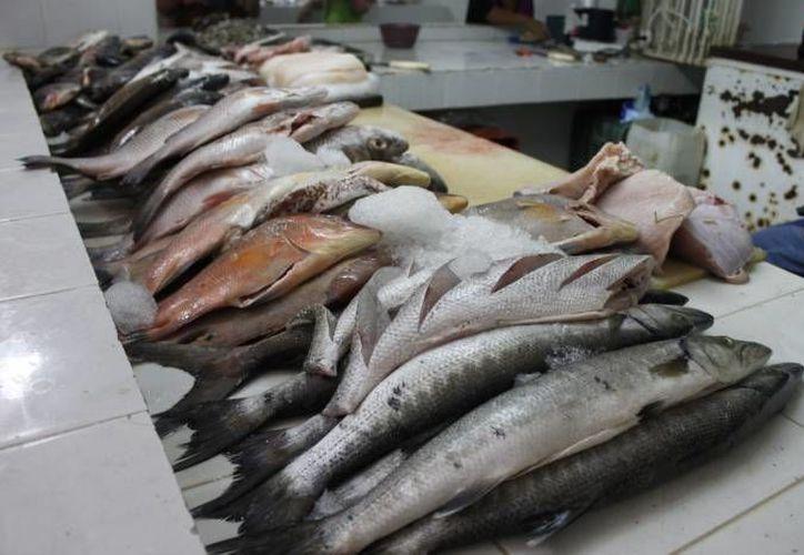 Gran parte del producto que se vende en las pescaderías de Playa del Carmen se trae de otras partes, como de Puerto Juárez, en el municipio de Benito Juárez. (Redacción/SIPSE)