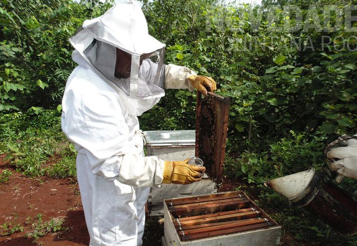 Productores aseguran que existen muchas trabas burocráticas. (Foto: Juan Rodríguez)