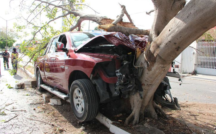 El chofer de una camioneta, quien, según reportes, es asesor del presidente municipal del municipio de Seyé, se estrelló contra un árbol, en Petcanché, en Mérida. (A. Pallota/SIPSE)