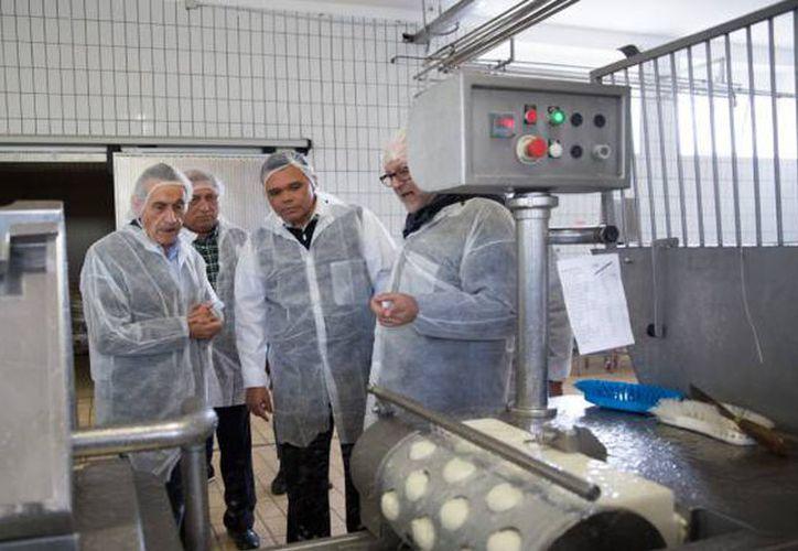 El Estado cuenta con una producción diaria de 22 mil litros de leche. (Milenio Novedades)